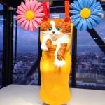 Chat sur une corde à linge Jeff Koons